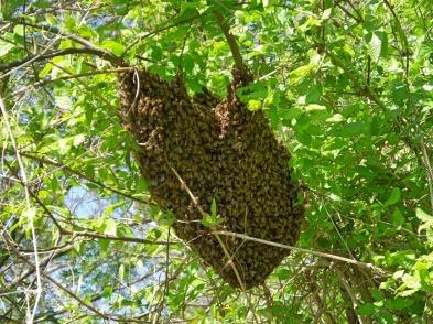swarm in tree